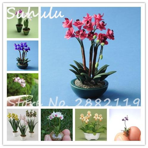 achetez en gros cymbidium fleur en ligne à des grossistes
