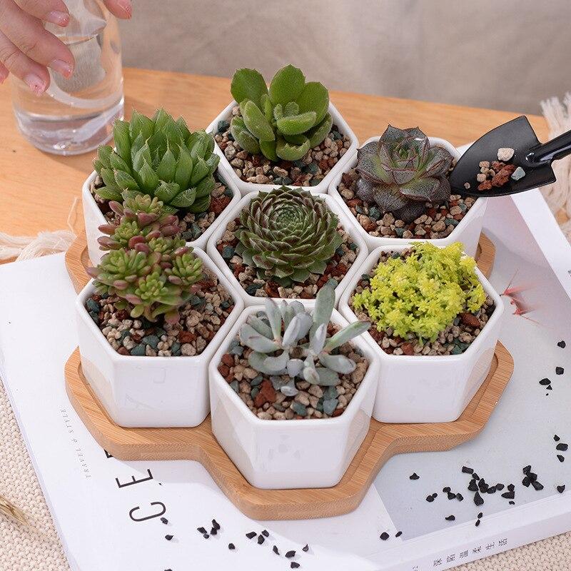 Set of Decorative Geometry Hexagon White Ceramic Succulent Plant Pot Porcelain Flower Pot Zakka Home Decor(7 pots+1 tray)
