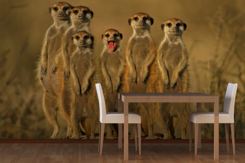 Mural meerkat animal wallpaper murals 3d 3d wallpaper for Mural 3d wallpaper