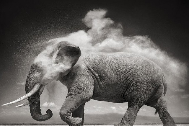 afrika elefanten w ste natur schwarz wei kunst tiere poster stoff silk poster drucken t201 188. Black Bedroom Furniture Sets. Home Design Ideas