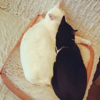Toast Bread Slices Shaped Mats Plush Pillow Pet Cats Bread Leisure Cushions Sleeping Cushions Pet Cat Dog Beds 1