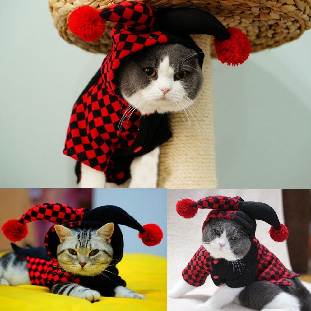 Funny Cats: Name Ideas for Cats with Funny Personalities ...