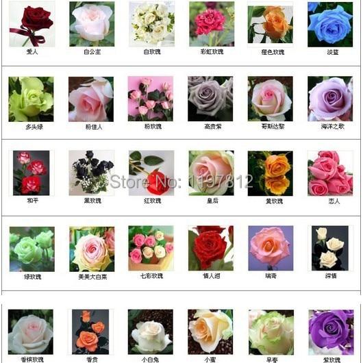 300 bonsai 30 colors rare rainbow rose flower bonsai Multi-color Plant Home Garden bonsai colorful rose flower bonsai Free shipp