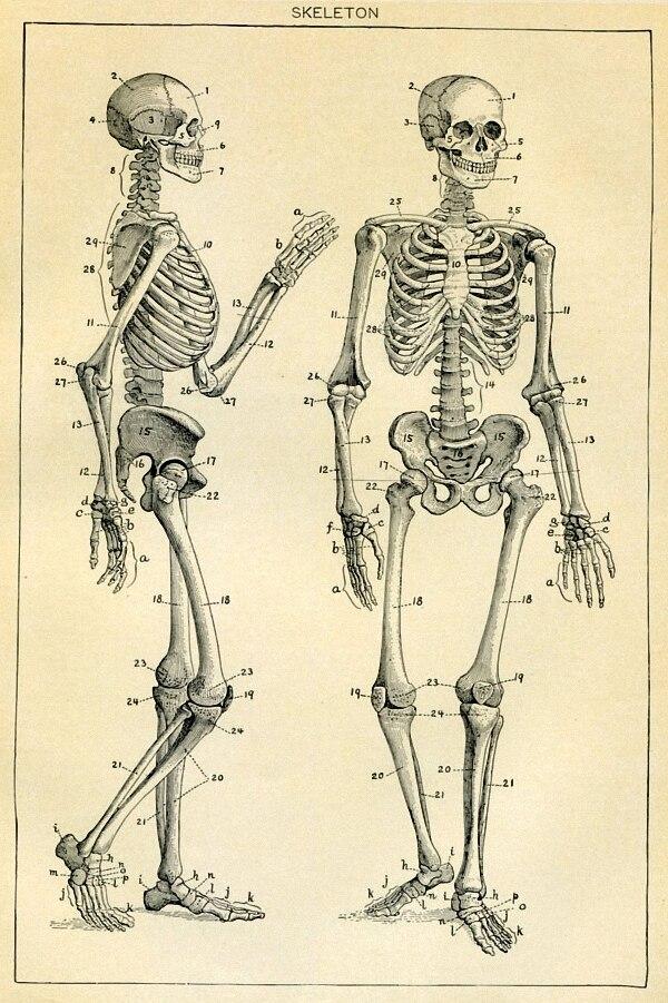 DIY frame Skeleton Vintage Medical Artwork Poster Fabric Silk ...