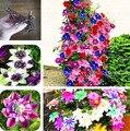 1 pcs lâmpadas clematis escalada, lâmpadas da árvore de clematis plantas de Jardim, plantio perene rara gar bulbos de flores para vaso de flores para casa
