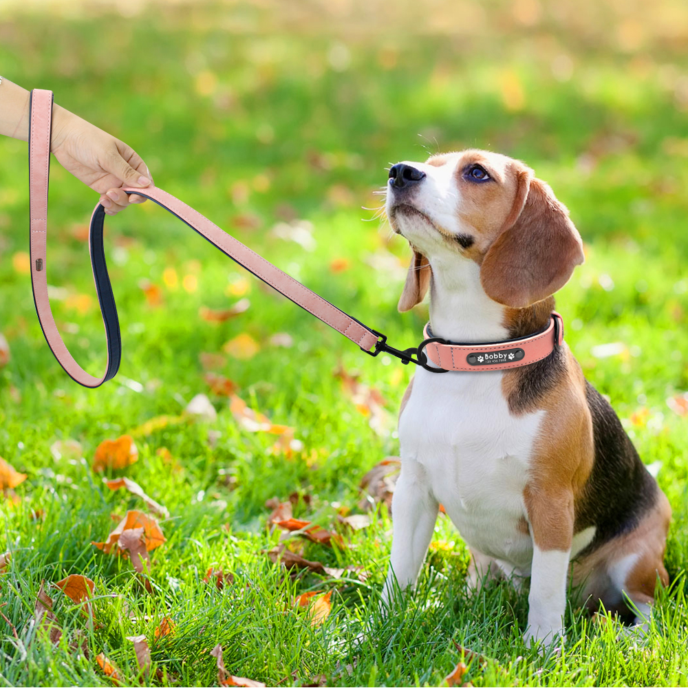 beagle dog with leather leash and collar custom personalized set dog dogs pet supply