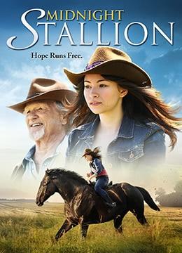 《午夜种马》2013年美国动作电影在线观看