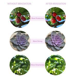 Image 5 - LED לגדול אור USB Phytolight LED מלא ספקטרום פיטו מנורת PhytoLamps ירקות מקורה פרח צמח אוהל תיבת שתילי זרעי
