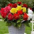 100 шт. Бегония семена, Malus Spectabilis горшке цветок семян отправить 300 семена клубники для подарка