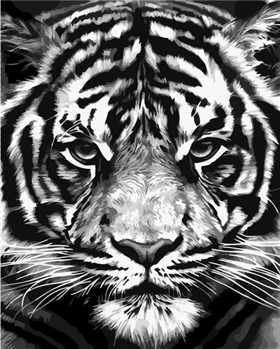 Paint By Numbers - Black And White Tiger Snow Leopard