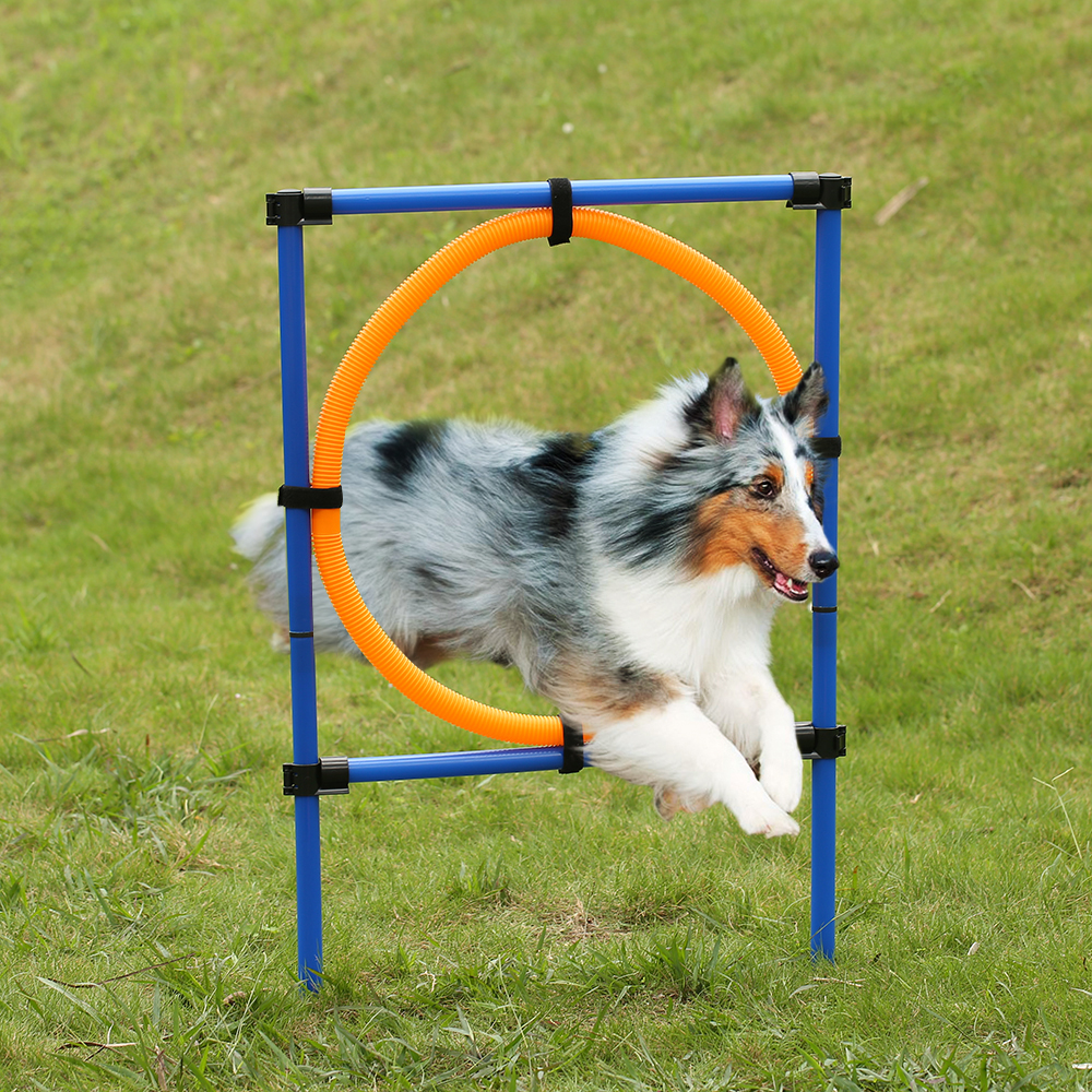 Outdoor Training Equipment Pet Dog Agility Exercise Sports