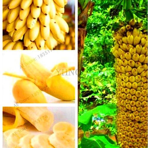 Big Promotion!100 pcs/bag rare double Potted banana garden bonsai tree  Organic fruit flores