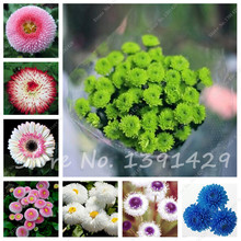 Free Shipping! 100 PCS Rare Flower Daisy Seeds Rainbow Chrysanthemum Flower Seeds, Bonsai plants Seeds for home garden