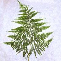 1 Adet 40-50 CM Küçük Kaya Fern Doğal Kurutulmuş Bitki Örneği Öğretim DIY Dekoratif Boyama Için Basın Çiçek malzeme