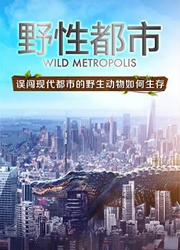 《野性都市》2018年英国,中国大陆纪录片电视剧在线观看