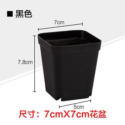 7cm Black Square Pots Succulents Nursery Box (70)