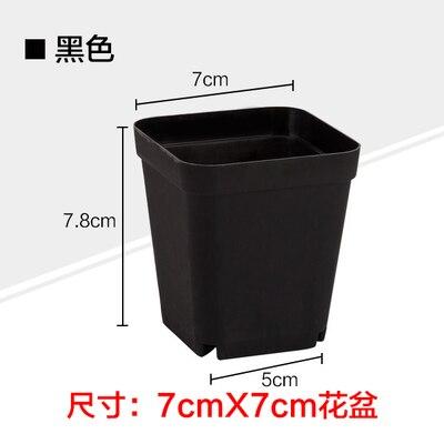 7cm Black Square Pots Succulents Nursery Box 70