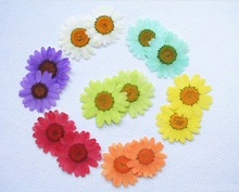 250pcs Pressed Press Dried Daisy Dry Flower Plants For Epoxy Resin Pendant Necklace Jewelry Making Craft DIY Accessories