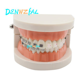 new Orthodontics Model for Dentist Dental 1/2 Standard Dentition with half Metal Brackets half ceramic bracket Teeth Model lower jaw of adult dentition model teeth dental model