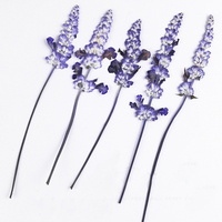 1000 Pcs Original Color Salvia On Stems Dried Pressed Flower Leaves For Glass Decoration Free Shipment