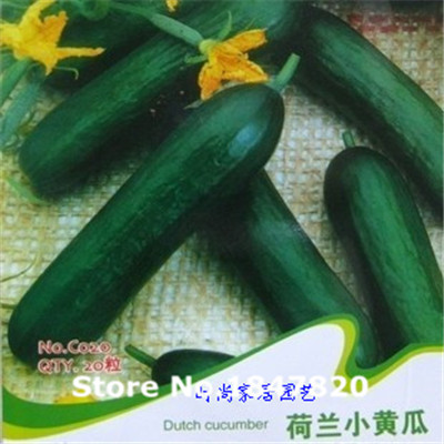100pcs Netherlands mini cucumber seeds,, mini cucumbers, crisp taste, vegetable seeds,