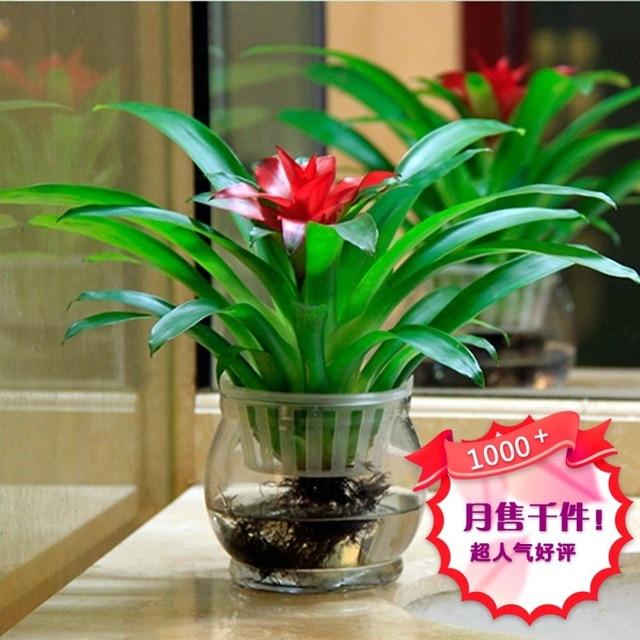 L Occasion Se Package En Pot Hydroponique Fleurs Rouge L Eau Pour