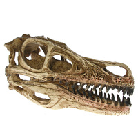 1Piece Dinosaur Skull Model Velociraptor Fossil Resin Skull Dinosaur Polystone Statue Skeleton Figurine For Office Desktop Decor