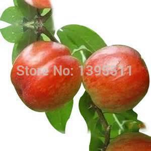 яблоки с доставкой из России