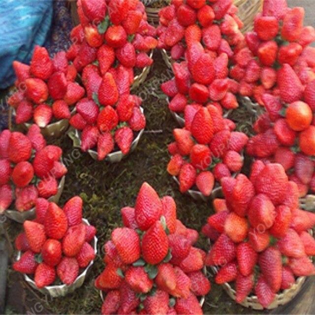 200 pz Rare Blu Fragola bonsai All'aperto Fragola Albero di Multi Colore di Frutta Biologica piante Bonsai Piantare Garden Home