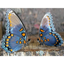 Алмазная картина yikee с двумя бабочками полноразмерная из страз