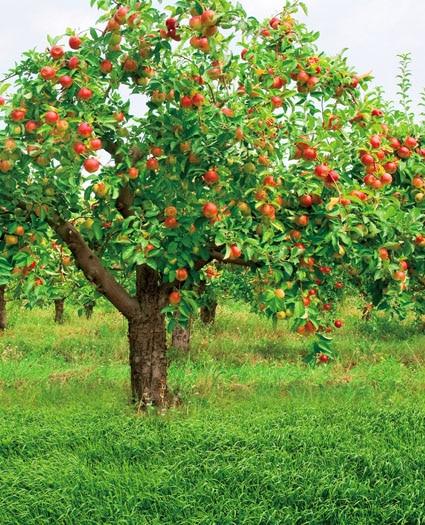 Us 165 Orchard Taman Pedesaan Foto Latar Belakang Untuk Anak Anak Alat Peraga Fotografi Untuk Foto Studio Kamera Fotografica Cm 5202 In Background