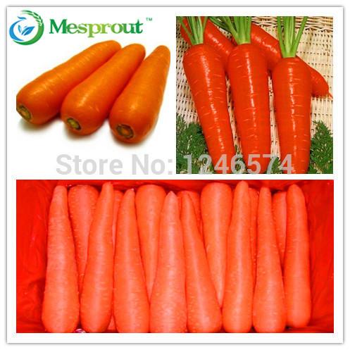 ginseng carrot seeds fruit vegetable seeds for home garden planting