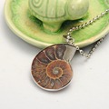 2017 Hot New Natural Healing Ammonite  Madagascar Gem Stone Pendant Necklace For Women And Men Conch Chrysanthemum Jewelry