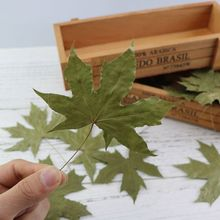 10Pcs/Set Natural Maple Leaf Autumn Fall Foliage Red Green Bookmark Dry Leaves for Photography Props Photo Studio Accessories