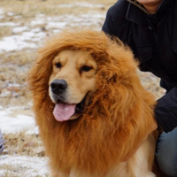 Dog Supplies Pet Costume Grooming Lion Mane Dog Wig Lion Neckerchief Collar For Big Dog Funny
