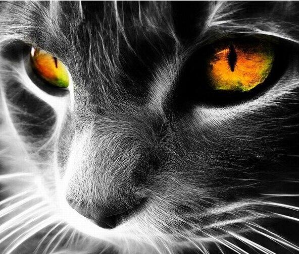 Nouveau style carré diamant peinture complète forage 5D peinture tableau d'ensemble forage diamant couture broderie cool cat