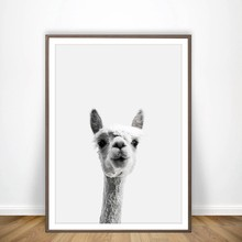 Llama Print and Poster Wall Art Alpaca Decor, Llama Art Canvas Painting Alpaca Picture Living Room Decoration(China)