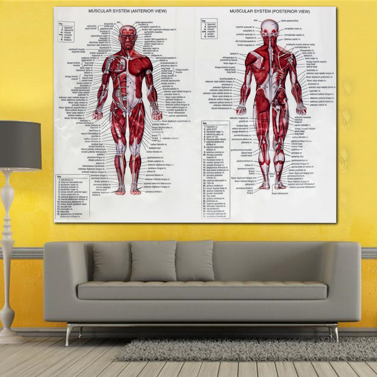 New 60x80cm Muscle System Poster Silk Fabric Anatomy Chart Human ...