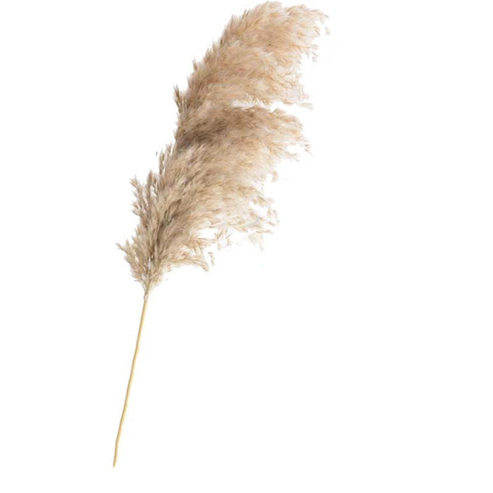 Dried-Plants Pampas-Grass Wedding-Flower Bunch Phragmites Communis Natural 20pcs Raw-Color