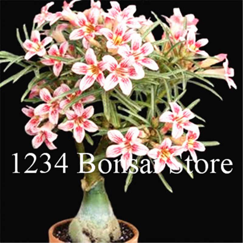 بيع! 1 قطع وردة الصحراء بونساي بوعاء الزهور بونساي العدينة Obesum داخلي بونساي النبات البسيطة بوعاء شجرة للمنزل حديقة النبات