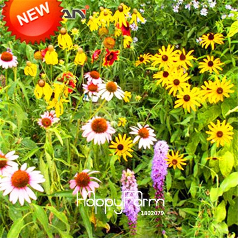 Acquista all 39 ingrosso online fiori di campo per la vendita for Vendita semi fiori