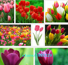 Hot Selling 100pcs Tulip Bulbs, Tulip Ball Seeds Bonsai Flower Pot Plant Ball Mix Colors DIY Home Garden Free Shipping