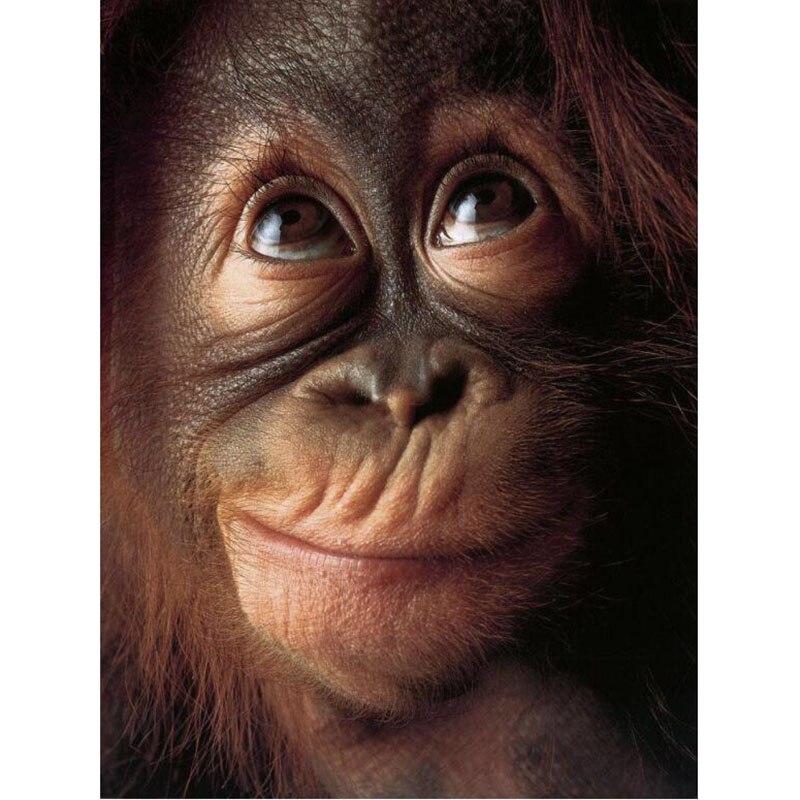 5D DIY round/square Diamond Embroidery Ape Apes Orangutan Chimpanzee Monkey Diamond Painting Cross Stitch Animal Home Decor v351 caterham 7 csr