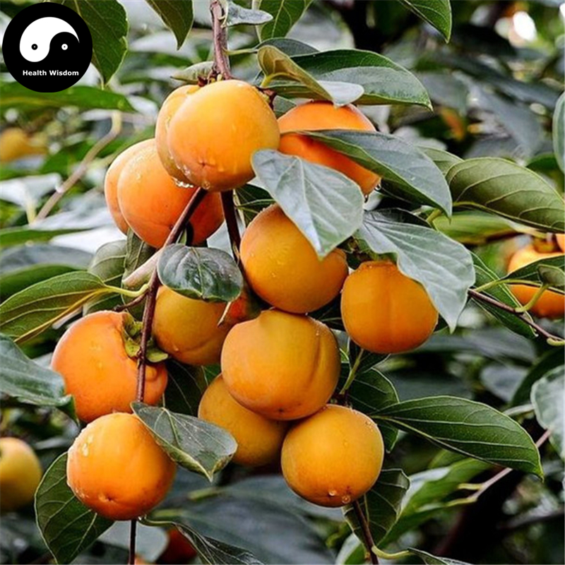 Buy Persimmon Fruit Tree Semente 60pcs Plant Diospyros Kaki For Chinese Fruit Shi