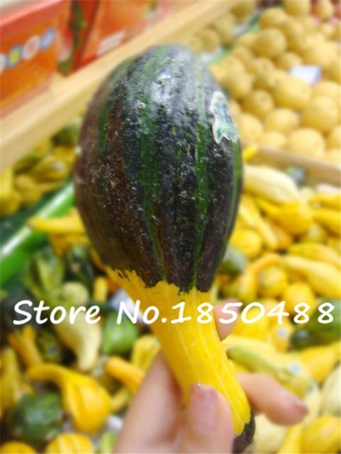 10 Particles/bag Clown Melon Seeds Ornamental Pumpkin Orgnic Edible ...