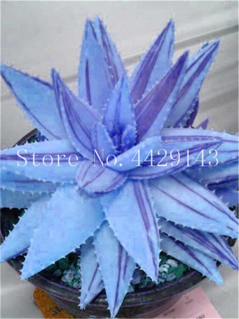 Big sale! 100 pçs/saco Exóticas flores de Aloe vera, Ornamental, comestível, medicinaland Beleza cosméticos plantas bonsai para casa e jardim
