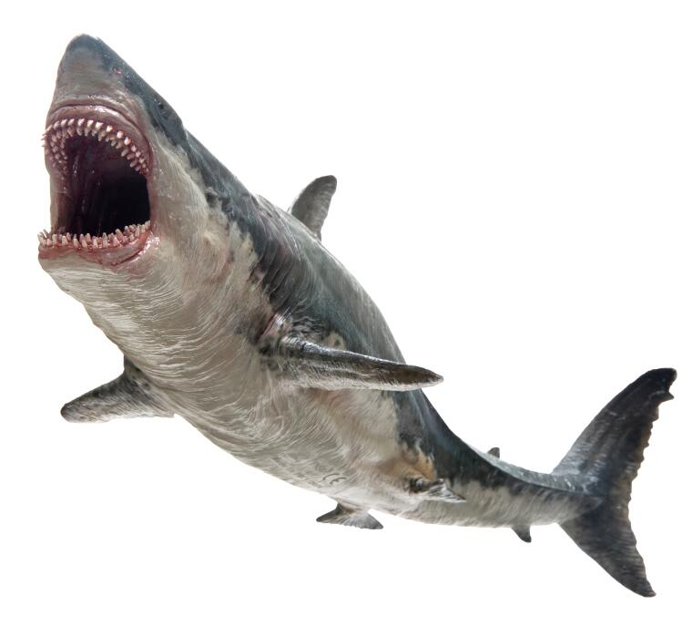 PNSO Megalodon Shark With Bracket Stand Support Classic Toys For Children Boys Sea Life Ancient Animal Model