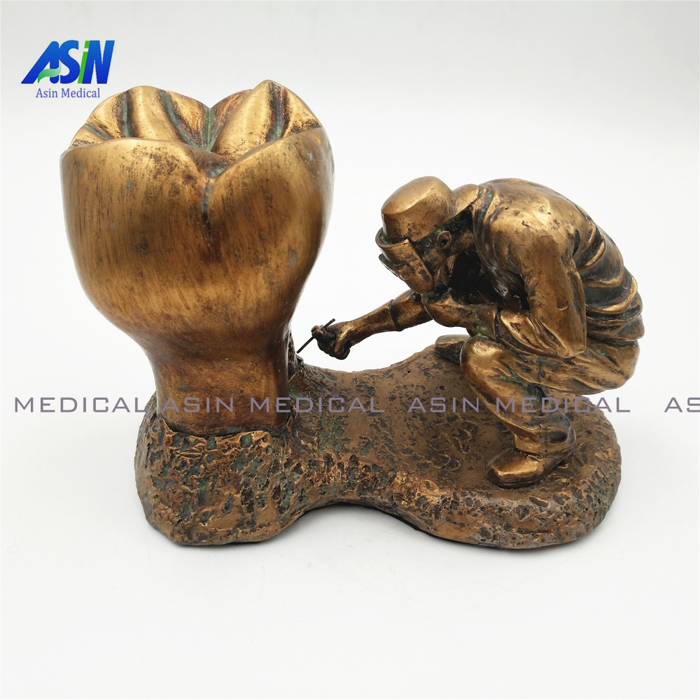 new 2017 Dental model copper material Copper statue of man and teeth tooth model dental pathology teeth model simranjeet kaur amaninder singh and pranav gupta surface properties of dental materials under simulated tooth wear