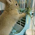 Кормушка для кроликов  миска для морской поросенок  кормушка для еды  корыта для еды  корыта  миска для еды  полка для кроликов  домашних живо...