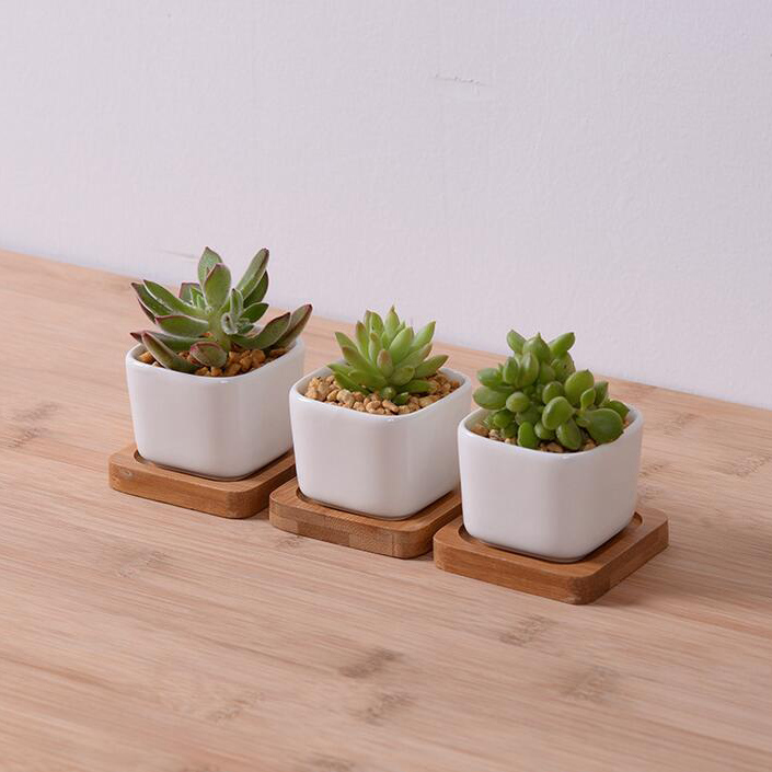 Free Shipping White Creamic Flower Pot With Bamboo Tray Indoor ...